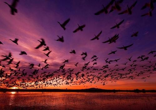 imagen Despliega tus alas y vuela